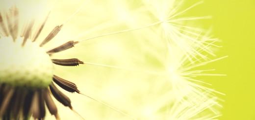 Dandelion (Canva)